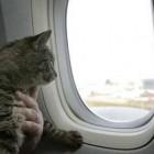 правила авиаперевозки животных